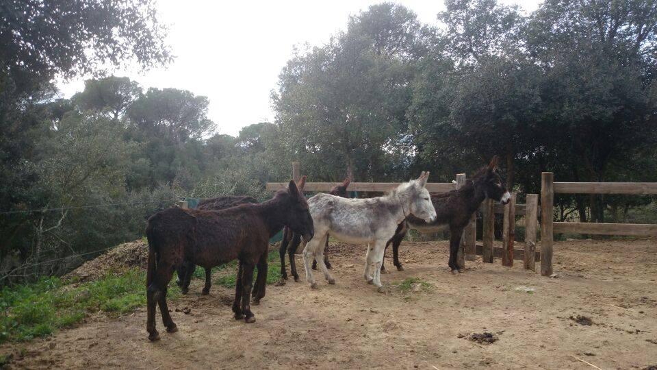 Burros en Rancho Mestres