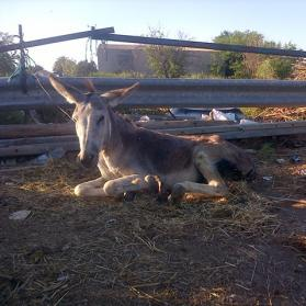 Donkey rescued from Alicante