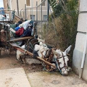 Exhausted donkey on street